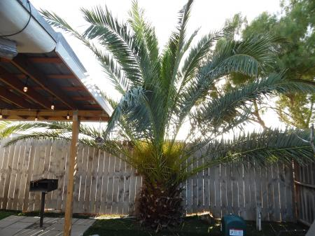 Click to enlarge image Tropical fenced yard, very private - La Perla, Gorgeous remodel, 1 BR 1 BA Cottage, Fenced Yard, Backyard Oasis -